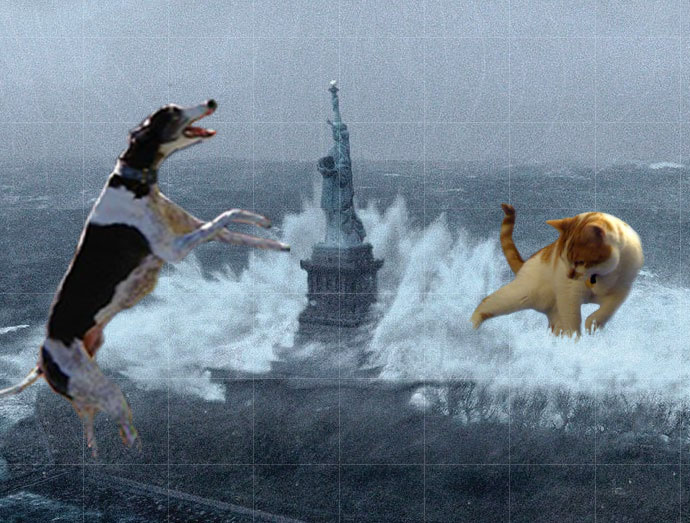 Brewskie Butt Nigel Buggers dog cat Hurricane Sandy photo meme