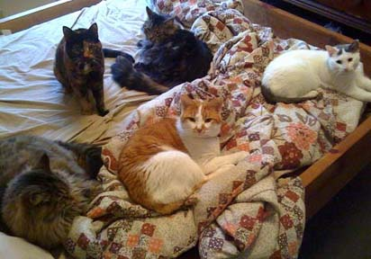 Five cats sleeping on bed