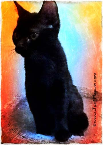 Black Cat Venus digital art by BZTAT